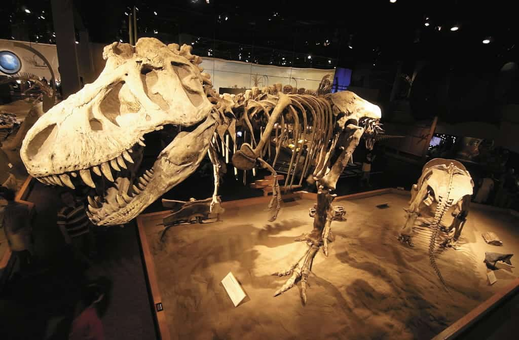 Bucket List: Sleepover with Dinosaurs at Royal Tyrrell Museum in Drumheller