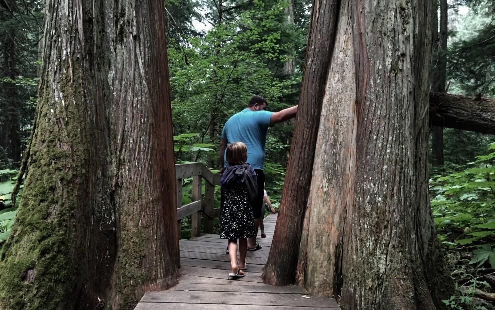 Boardwalk of the Giant Cedars in Mt. Revelstoke National Park