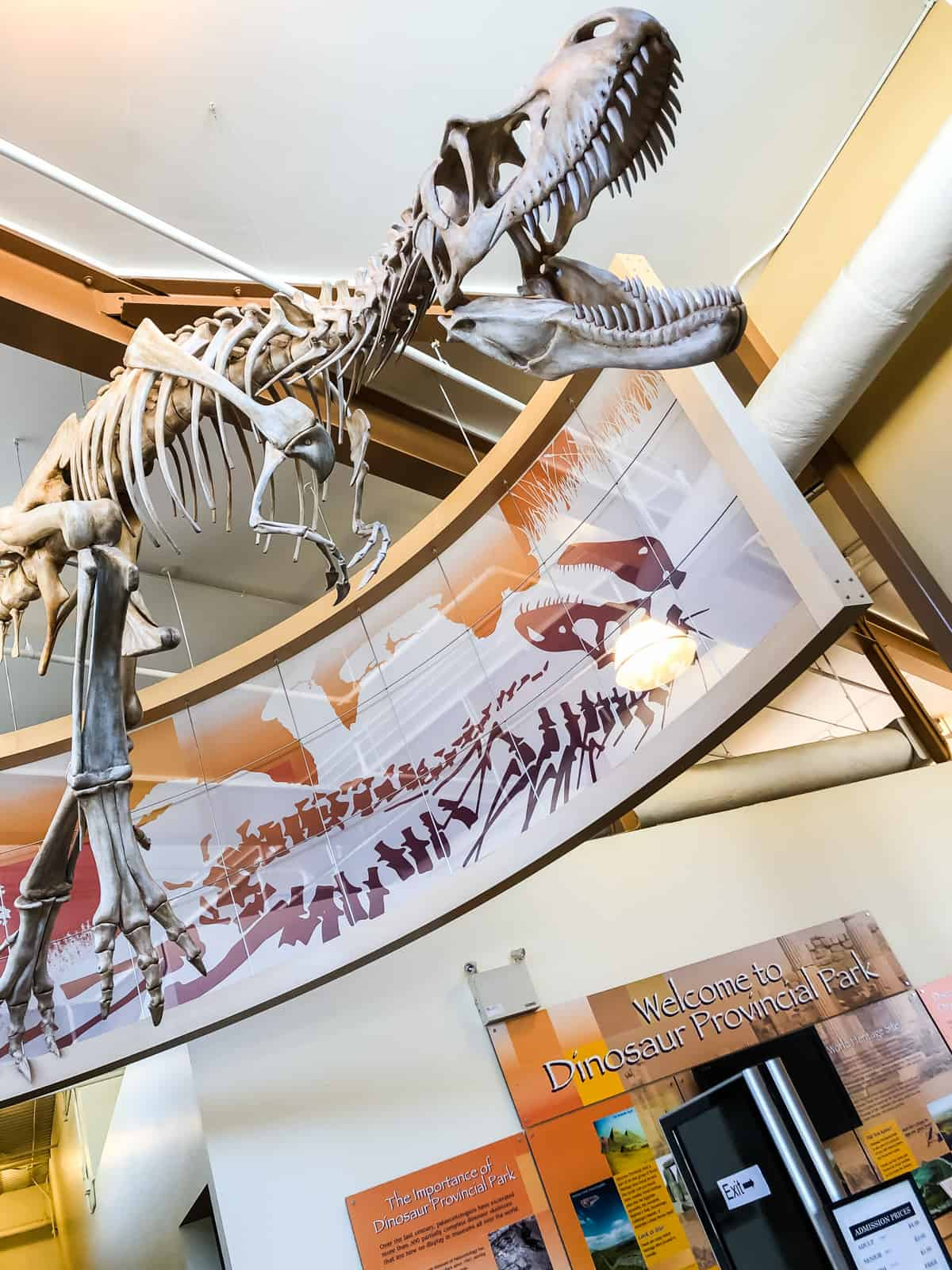 A dinosaur skeleton suspended from the ceiling of a museum