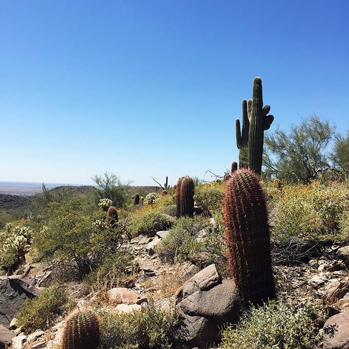 McDowell Sonoran Preserve Trails: Lost Dog Wash Trail