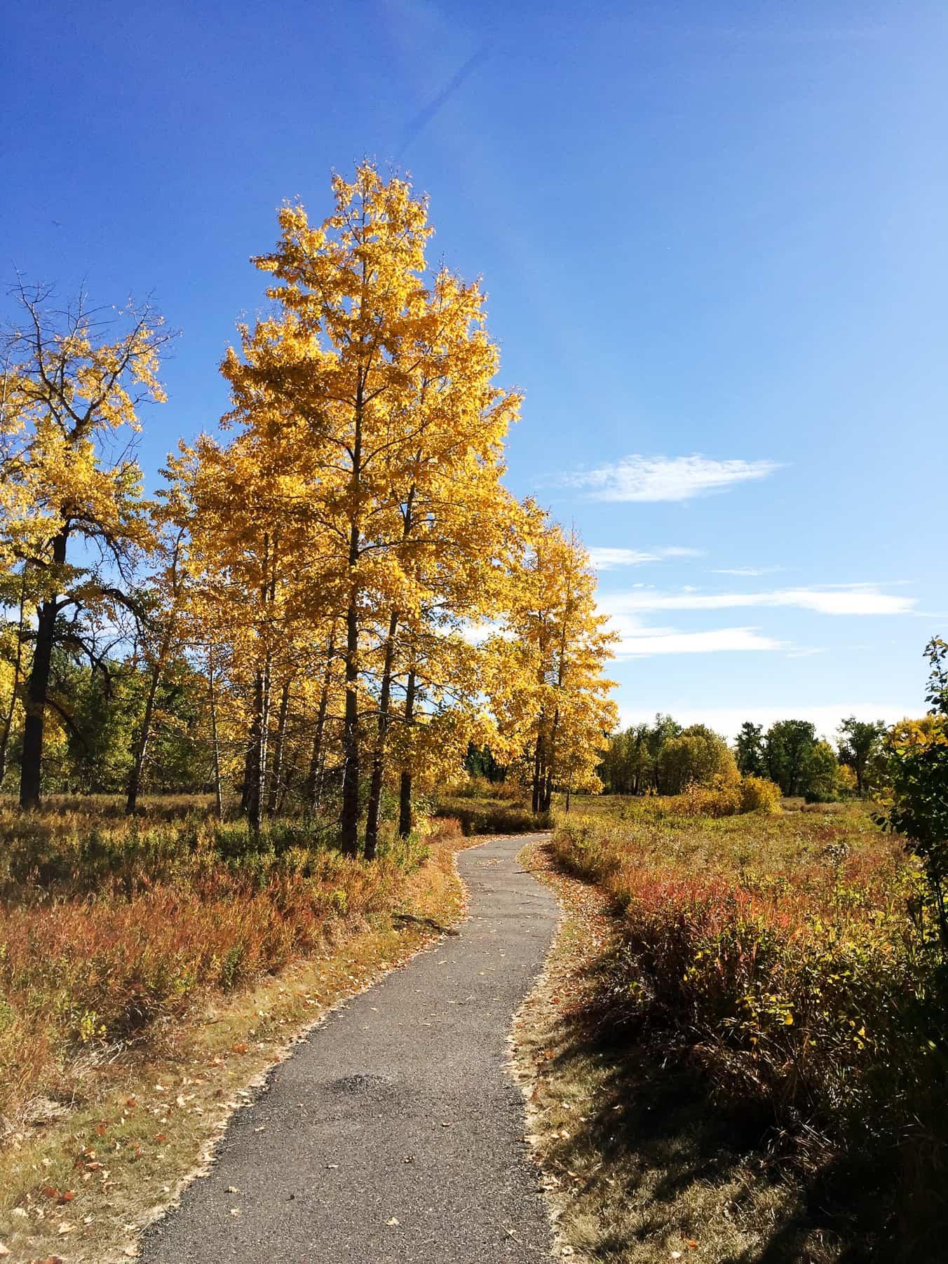 5 Reasons to Visit Fish Creek Provincial Park in Fall