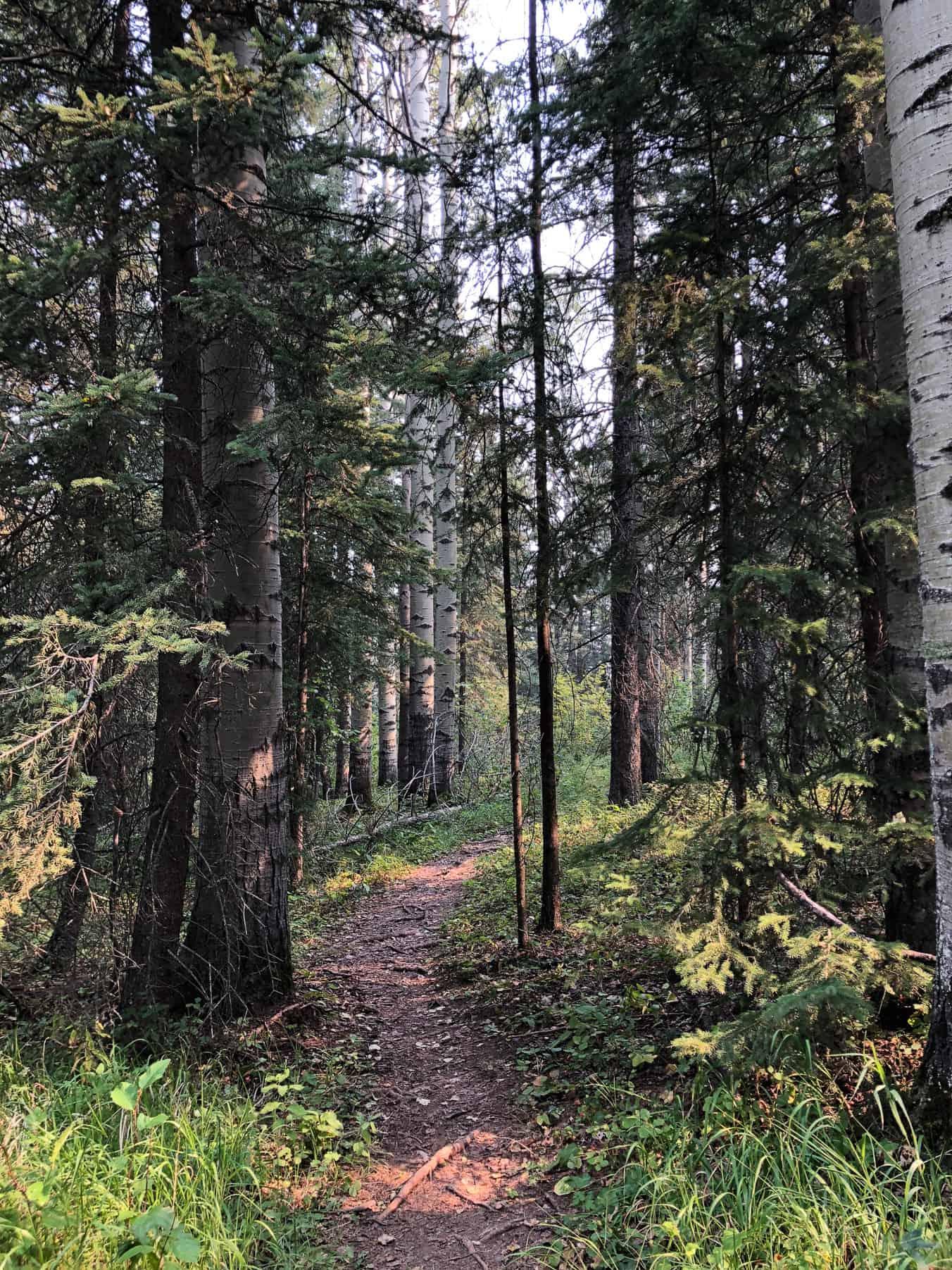 Hiking in Snake Hill Recreation Area, Sundre Alberta