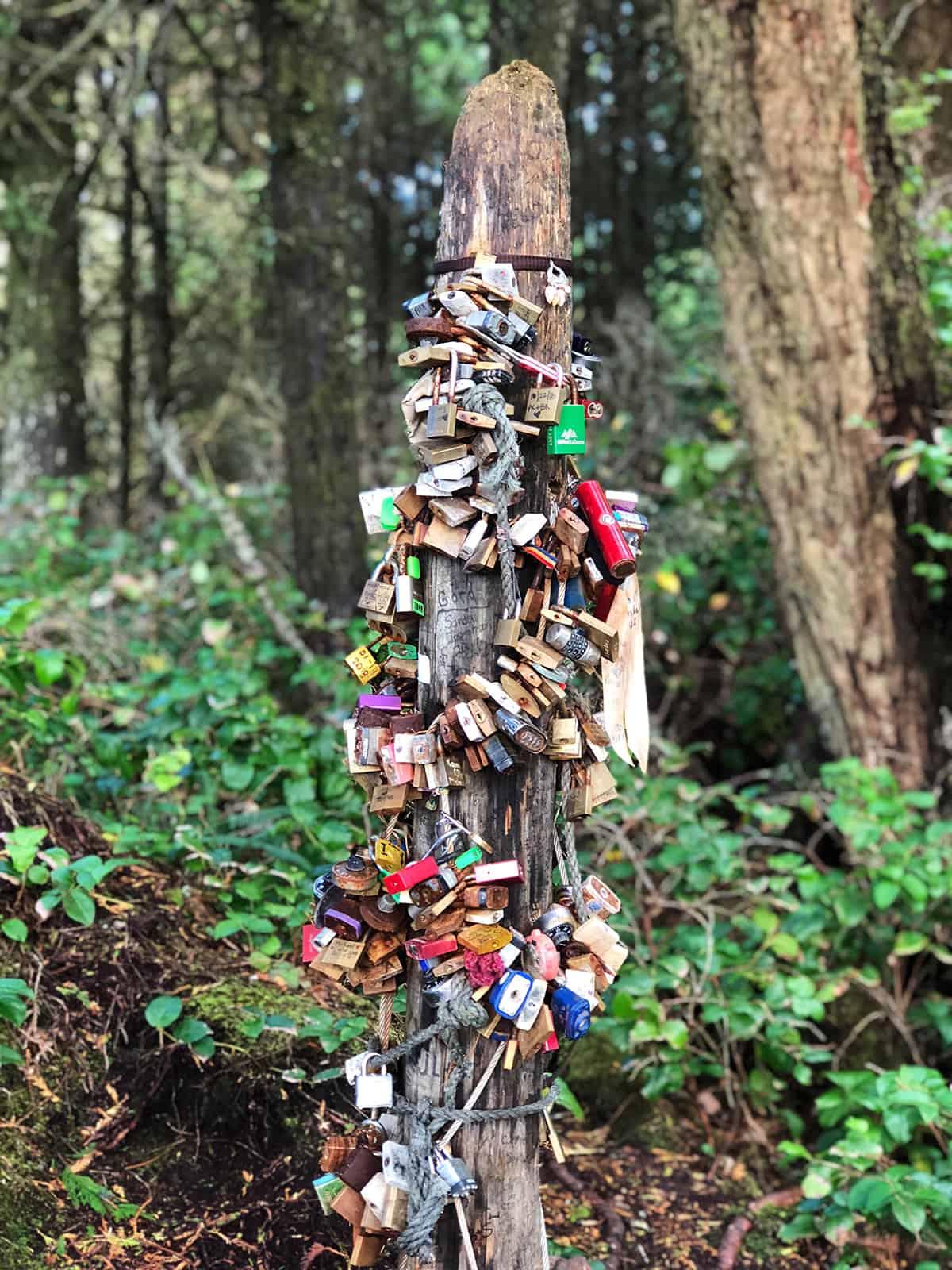 Love Locks, Wild Pacific Trail Ucluelet