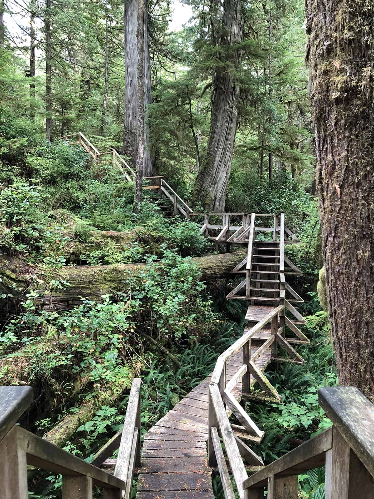 Rainforest Trail, Ucluelet